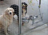 espace levage mat riel pour pensions canines les accessoires pour chiens gamelle chariot. Black Bedroom Furniture Sets. Home Design Ideas