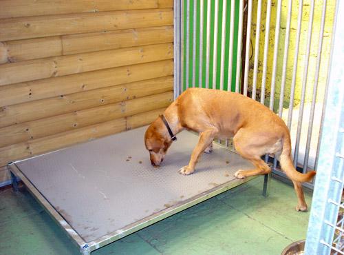 espace levage mat riel pour pensions canines les. Black Bedroom Furniture Sets. Home Design Ideas