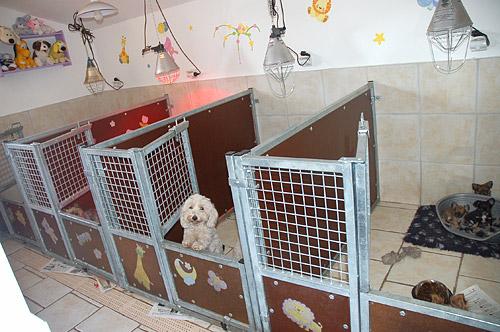 espace levage r alisations en mat riel pour pensions canines et chenils. Black Bedroom Furniture Sets. Home Design Ideas